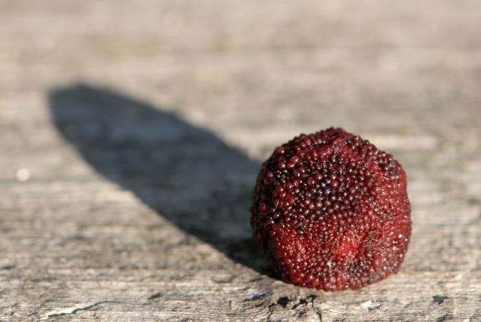 weird looking fruits